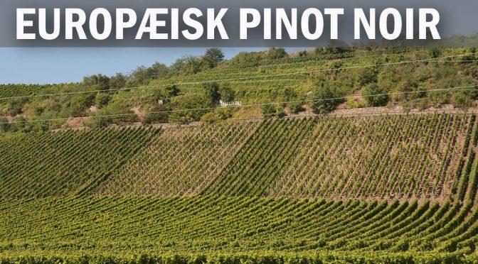 Pinot Noir fra Bourgogne, Alsace, Rheinhessen & Baden med Bækkelund Vine på Restaurant NOK (2)